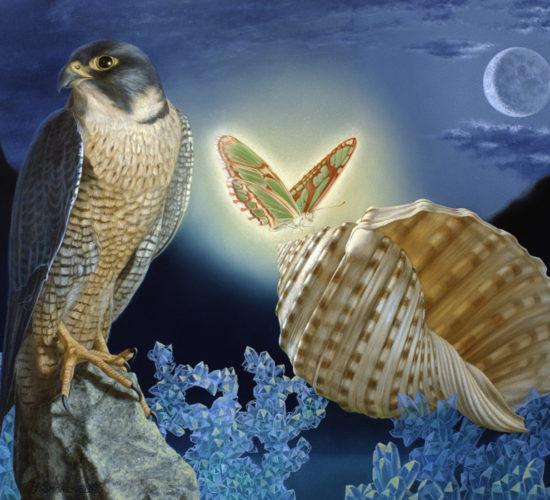 Vogel en schelp